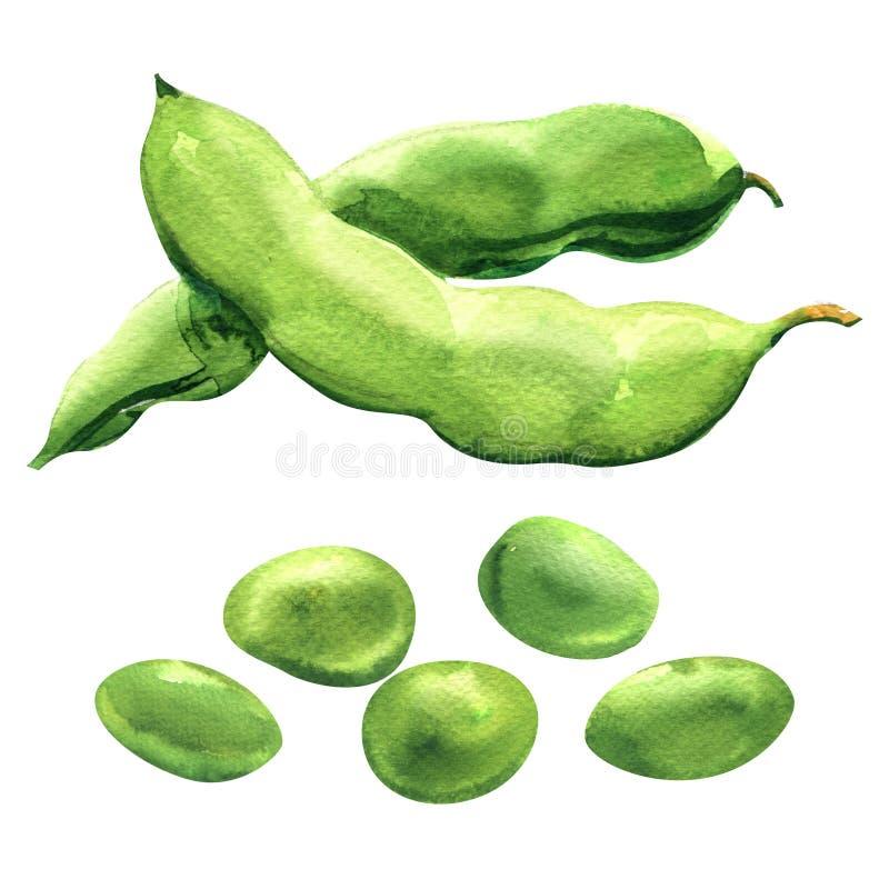 Verse groene erwten, verse bonen, gezond voedsel, organische geïsoleerde groente, hand getrokken waterverfillustratie op wit royalty-vrije illustratie