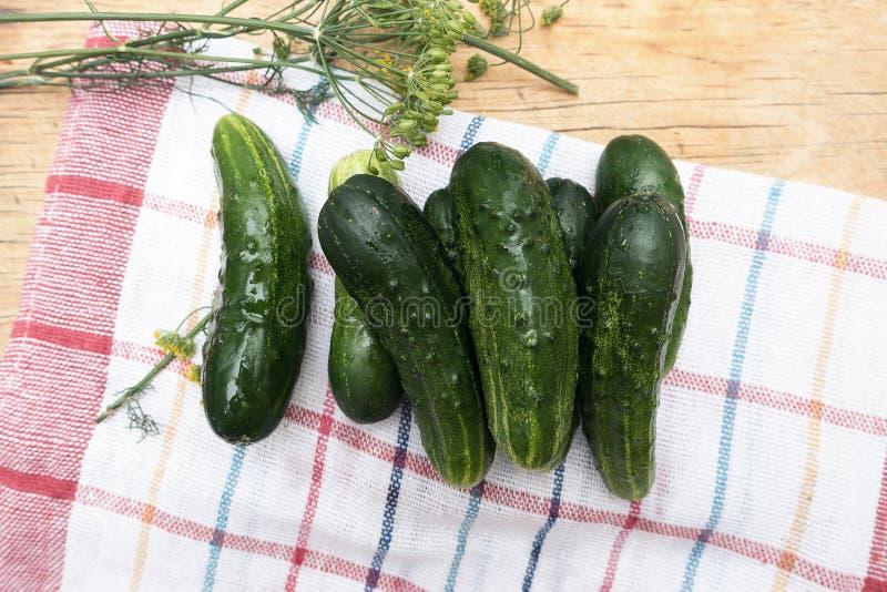 Verse groene komkommers en dille op de handdoek van de keukenplaid stock afbeeldingen