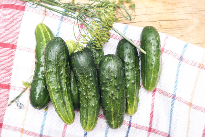 Verse groene komkommers en dille op de handdoek van de keukenplaid royalty-vrije stock afbeelding