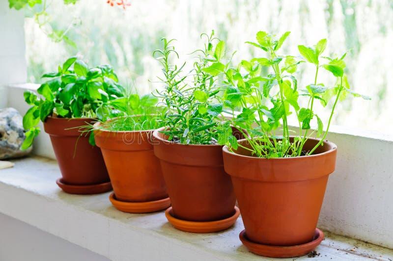 Verse groene kruiden stock foto