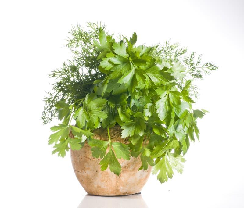 Verse groene kruiden in een pot over wit royalty-vrije stock foto's