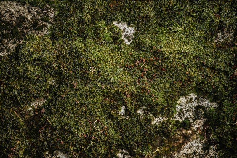 Verse groene mosmuur royalty-vrije stock foto's