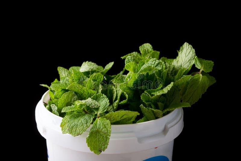 Verse groene muntbladeren stock foto