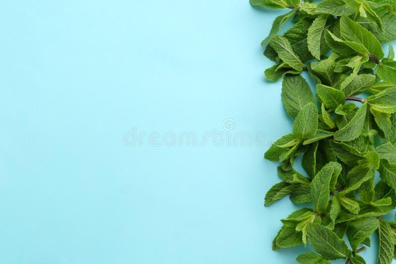 Verse groene muntbladeren op kleurenachtergrond stock foto's