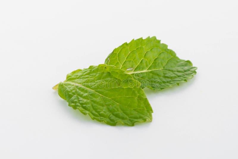 Verse groene muntbladeren op wit stock fotografie