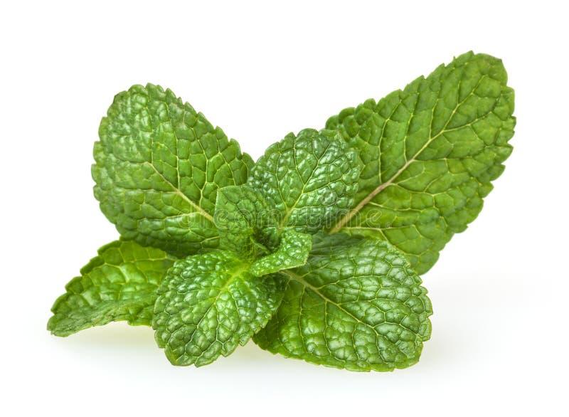 Verse groene muntbladeren op wit royalty-vrije stock afbeeldingen