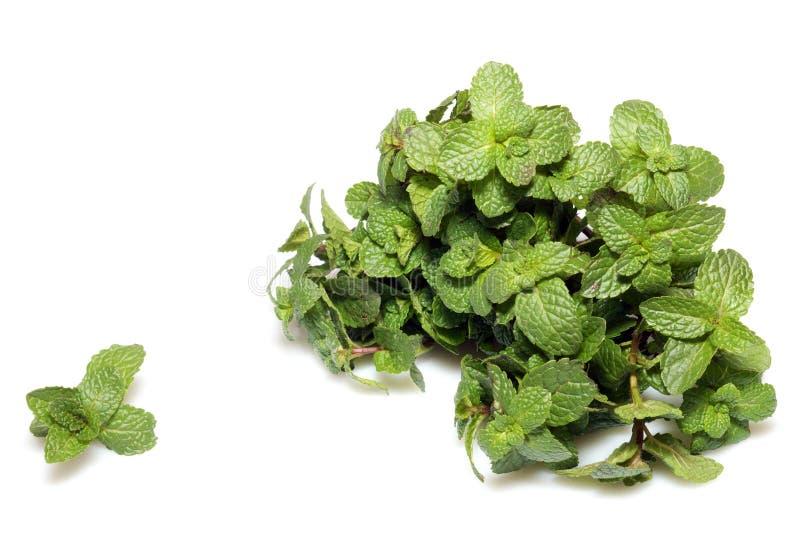 Verse groene muntbladeren op wit stock afbeeldingen