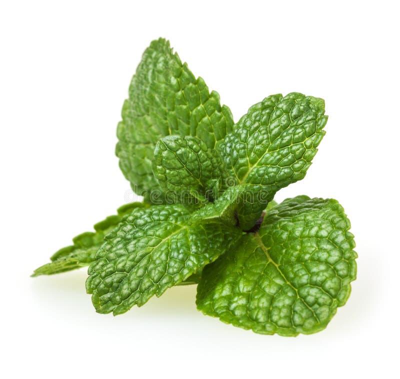 Verse groene muntbladeren op wit royalty-vrije stock afbeelding
