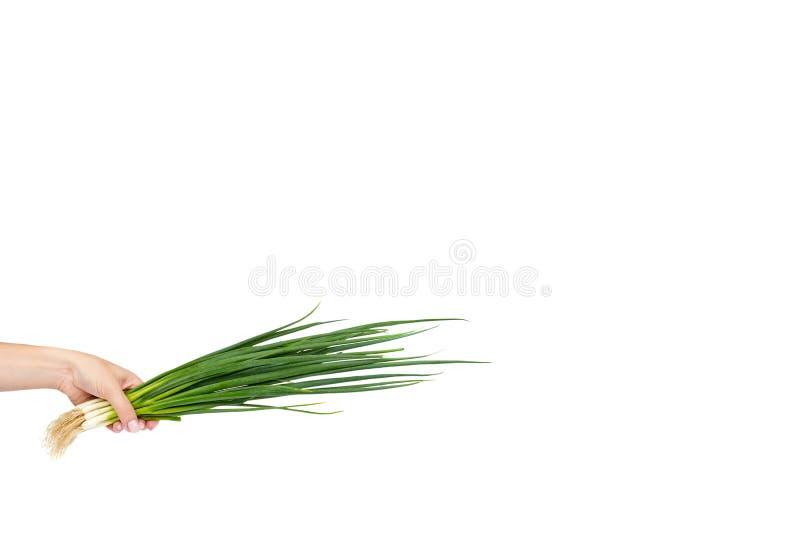 Verse groene organische die ui met hand op de witte achtergrond, exemplaar ruimtemalplaatje wordt geïsoleerd stock fotografie