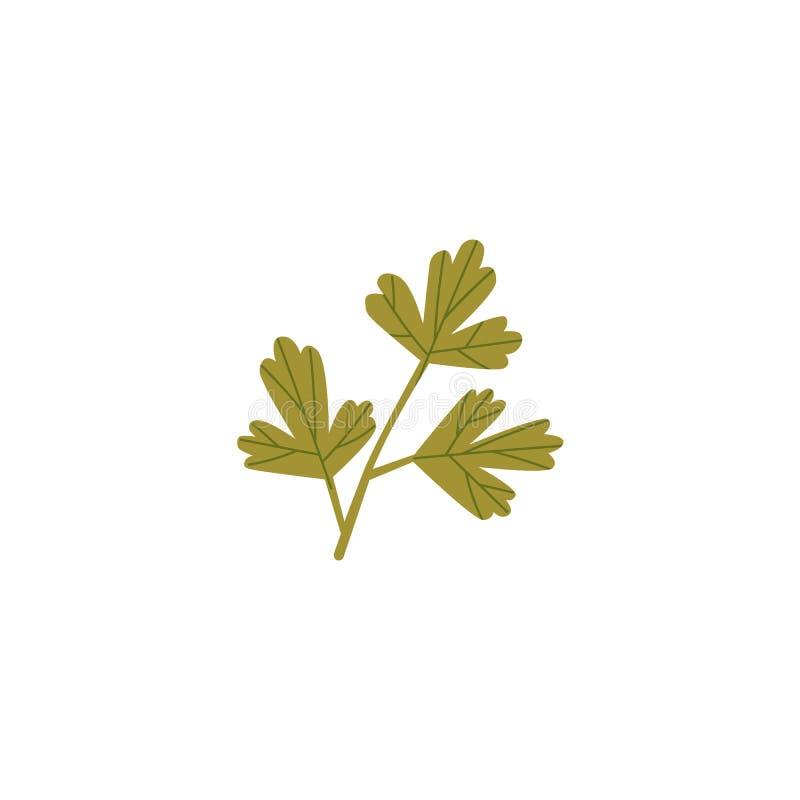 Verse groene peterselie, koriander, korianderblad royalty-vrije illustratie
