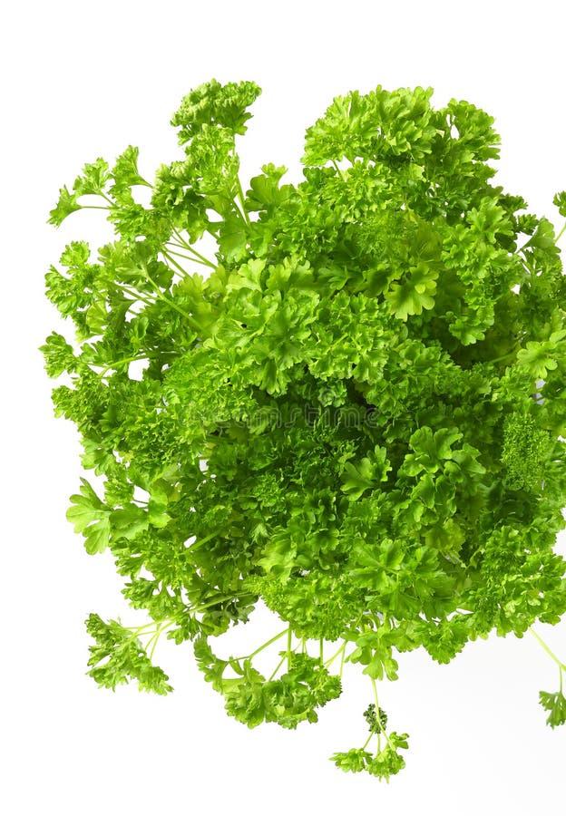Verse groene peterselie stock afbeeldingen