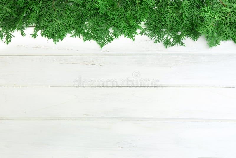 Verse groene pijnboombladeren, Oosterse die Arborvitae, Thuja-orientalis ook als Platycladus-orientalisdecoratie wordt bekend op  stock fotografie
