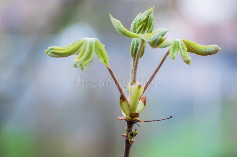Verse groene spruiten De aard komt aan het leven in de lente stock afbeelding