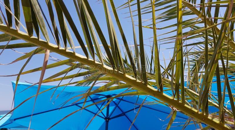Verse groene tak van palm voor heldere blauwe parasol royalty-vrije stock afbeeldingen