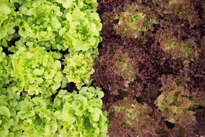 Verse groente in de winter stock foto