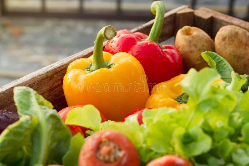 Verse groenten in houten die doos van organisch landbouwbedrijf wordt geoogst royalty-vrije stock foto's