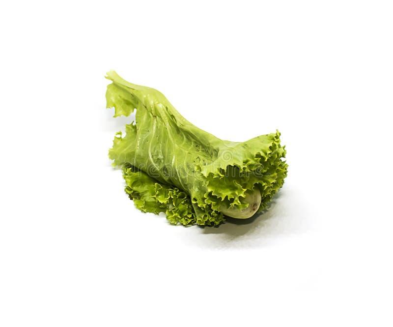 Verse groenten, komkommer en salade royalty-vrije stock afbeeldingen