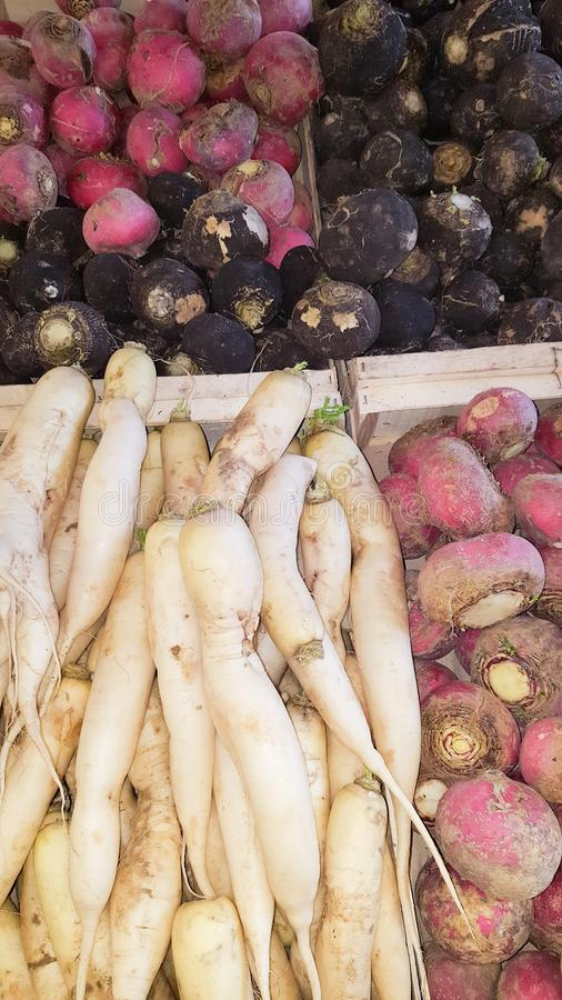 Verse groenten natuurlijke organische radijs in markt voor verkoopachtergrond stock afbeeldingen