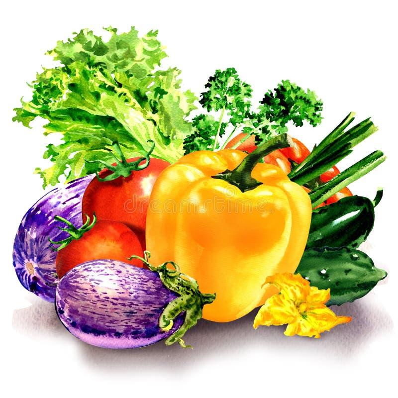 Verse groenten, samenstelling met ruwe peper, aubergine, tomaat, komkommer, salade, peterselie, waterverfillustratie stock afbeeldingen