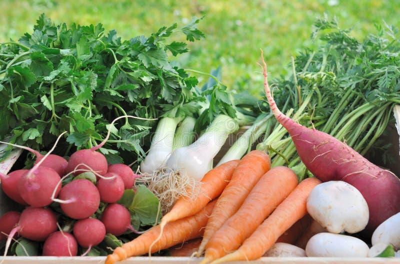 Groenten in de tuin latest daarna komt de sfeer van de for Groenten tuin