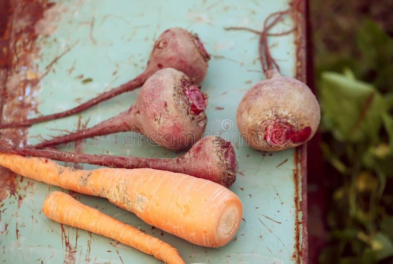 Verse groentenwortelen en bieten stock foto