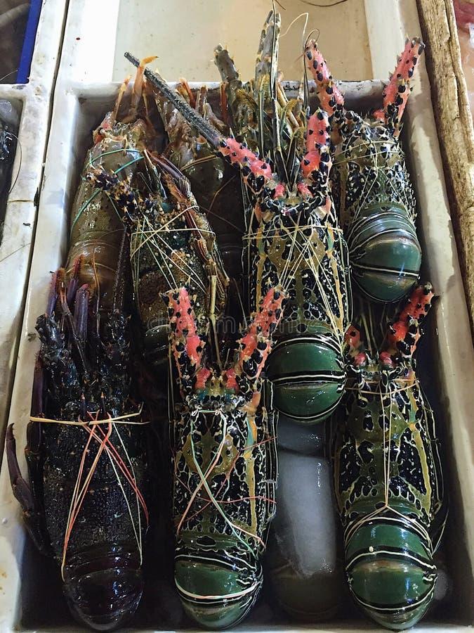 Verse grote gekleurde zeekreeften bij de vissenmarkt stock afbeeldingen