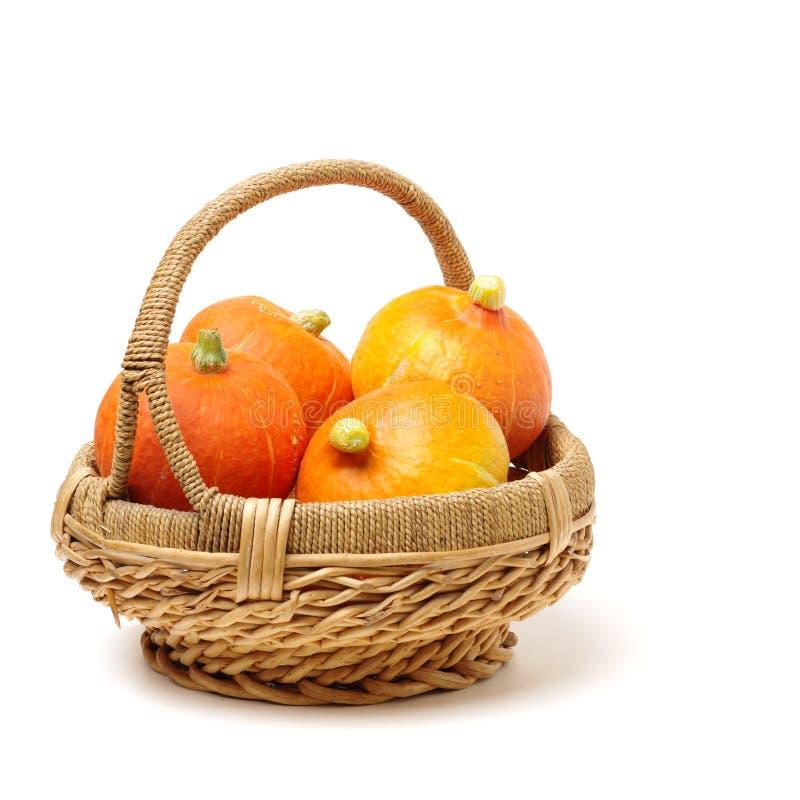 Verse Grote rijpe organische heldere oranje pompoen stock fotografie