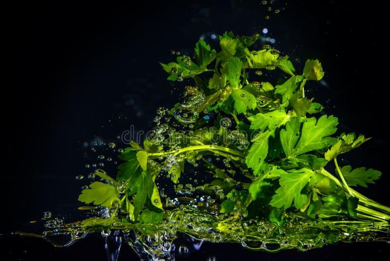 Verse herbals onder water royalty-vrije stock afbeeldingen