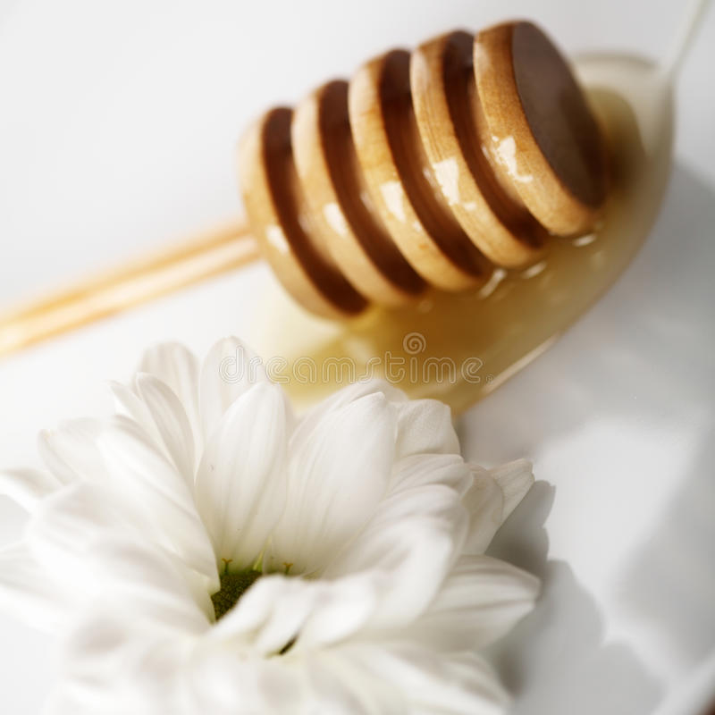 Verse honing stock foto