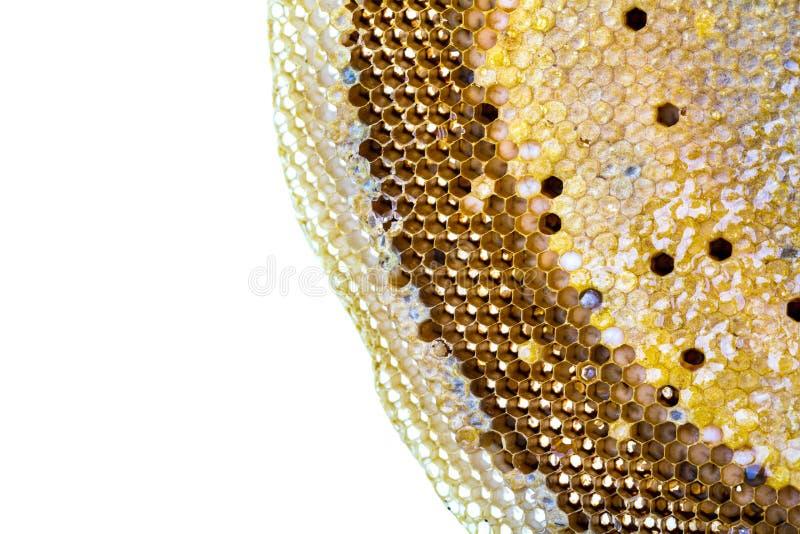 Verse honing op kamachtergrond royalty-vrije stock afbeeldingen