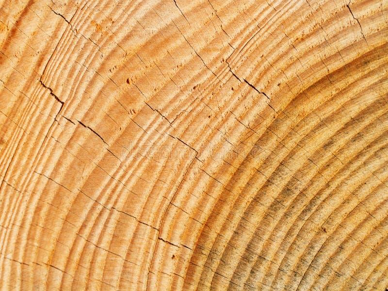Verse houten nagels stock foto's