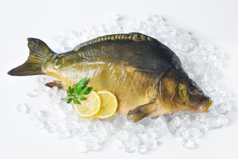 Verse karper met citroen op ijs royalty-vrije stock afbeelding