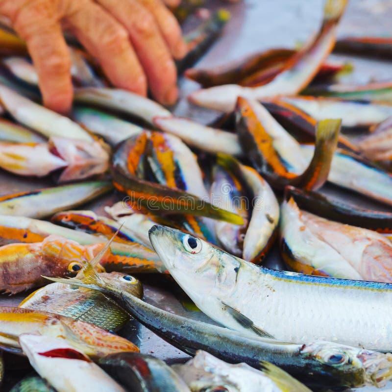Verse kleine vissen bij een marktkraam in het eiland van favignana, Trapan, Sicilië, Italië stock foto's