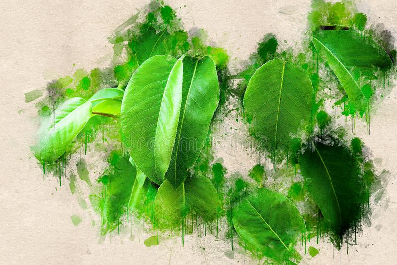 Verse kleurrijke groene perenbladeren stock foto's