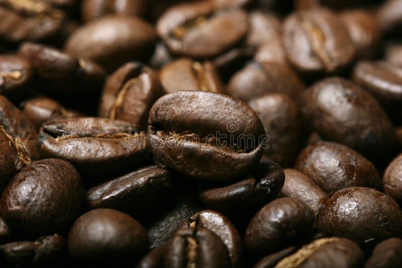 Verse koffiebonen stock afbeelding