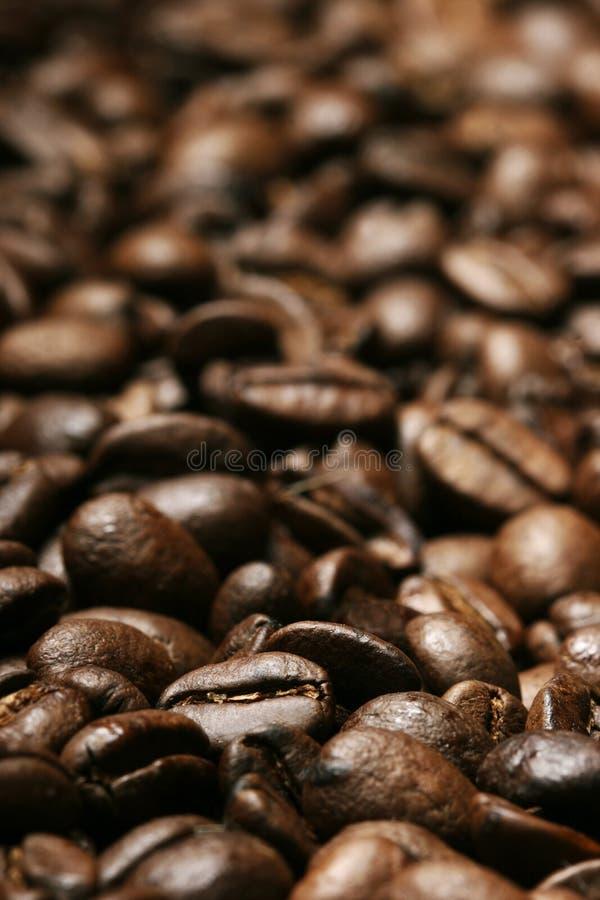 Verse koffiebonen stock foto's