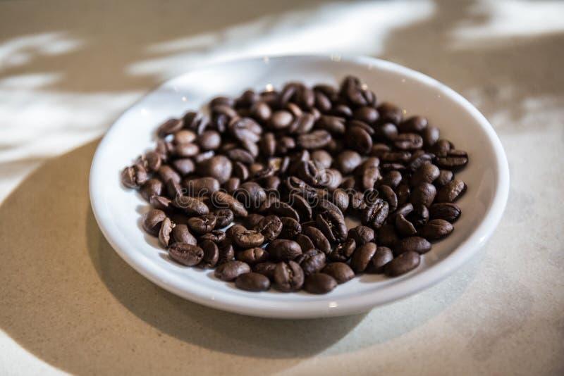 Verse koffieboon royalty-vrije stock fotografie