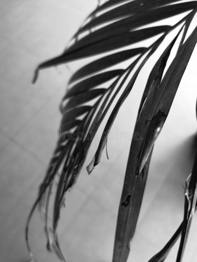 Verse kokosnotenbladeren stock foto's