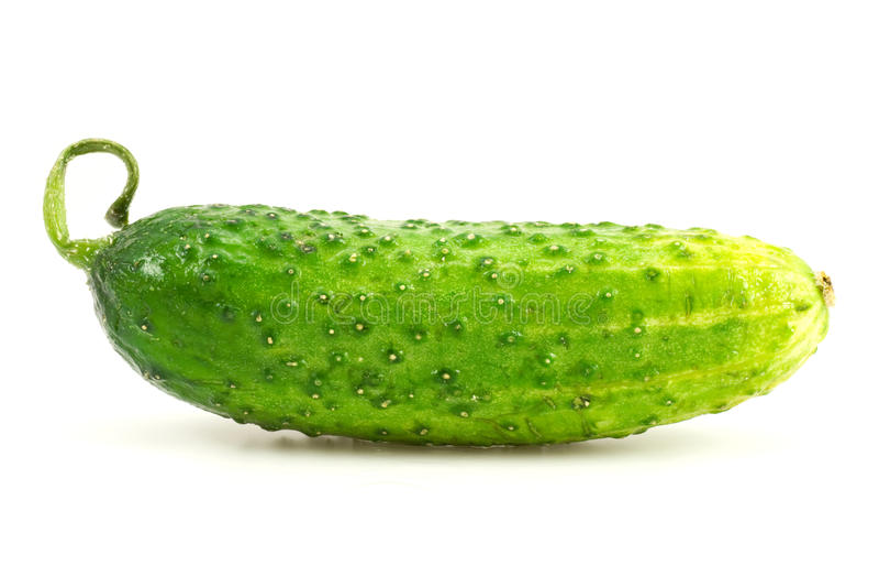 verse komkommer royalty-vrije stock foto