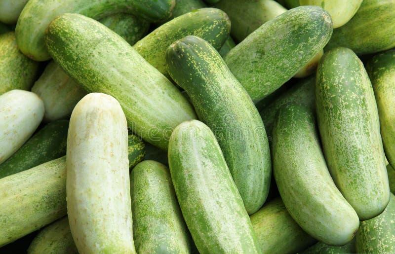 Verse komkommer stock foto's
