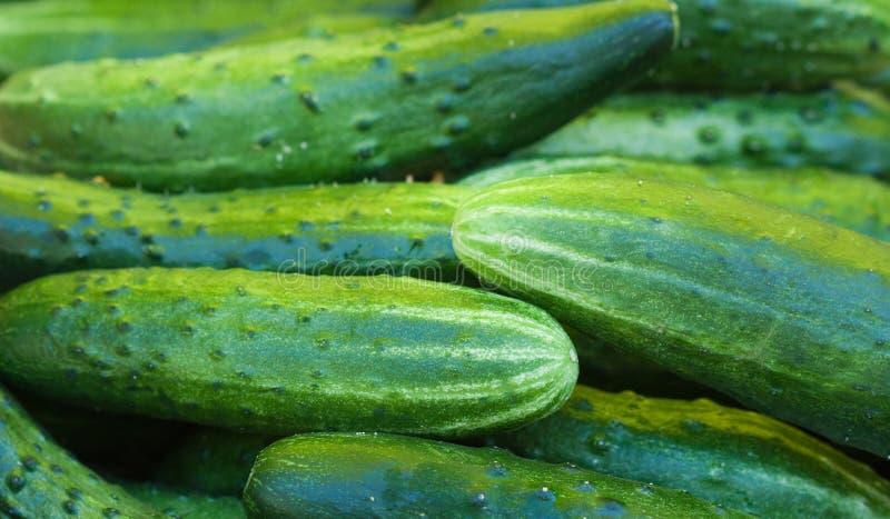 Verse komkommers royalty-vrije stock foto