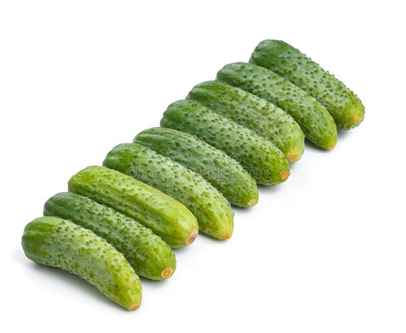 Verse komkommers voor salade en behoud dat op witte bac wordt geïsoleerd royalty-vrije stock afbeeldingen