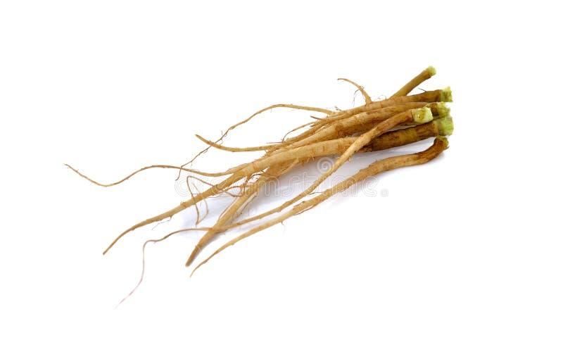Verse korianderwortels op wit royalty-vrije stock afbeelding