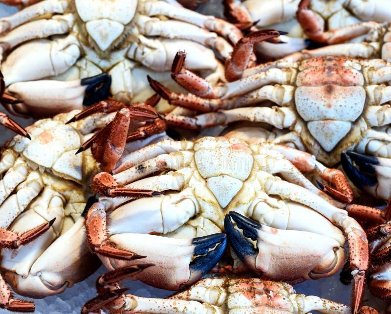 Verse Krabben voor Verkoop stock foto's