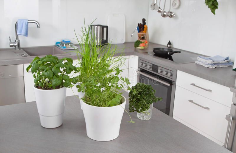Verse Kruiden Keuken : Verse kruiden in bloempotten in keuken stock afbeelding