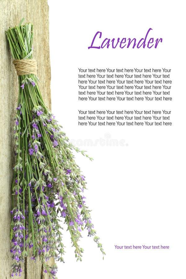 Verse lavendel royalty-vrije stock foto