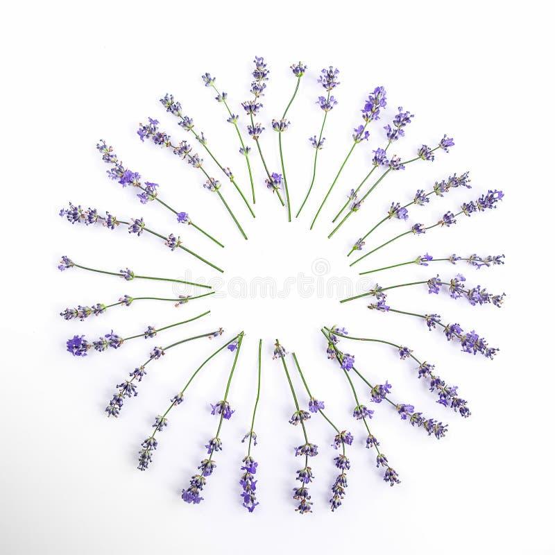 Verse lavendelbloemen en bosbessen op een witte achtergrond De de lavendelbloemen en bosbessen bespotten omhoog De ruimte van het royalty-vrije stock afbeeldingen