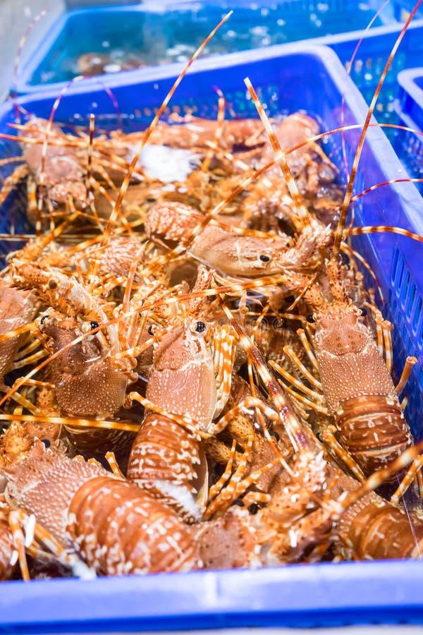 Verse levende zeekreeften stock afbeelding