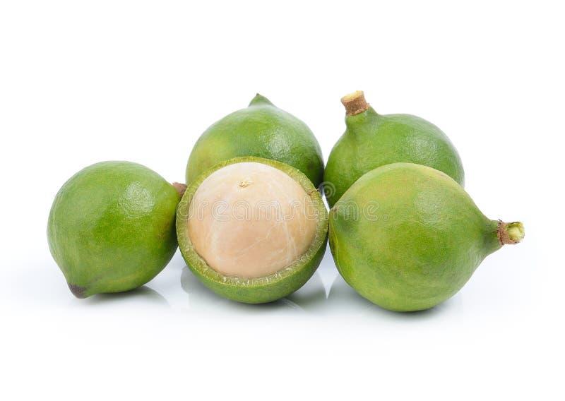 Verse macadamia noot stock foto's