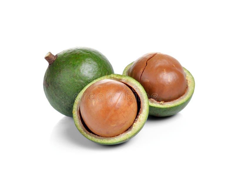 Verse macadamia noot royalty-vrije stock afbeelding